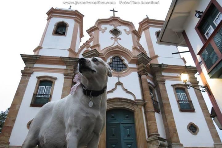 Branquinha - a cadela comunitária mais famosa de Ouro Preto. Foto: Tino Ansaloni